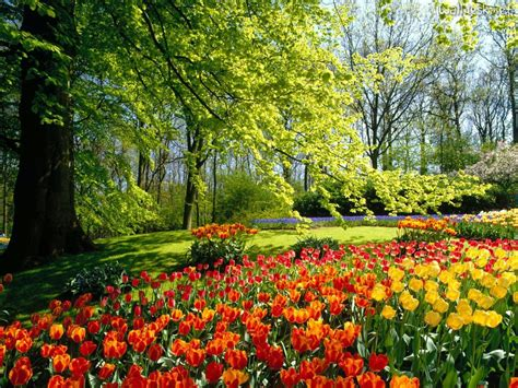 Netherlands Flower Garden Gardening Keukenhof Gardens