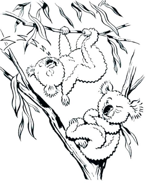 realistic koala coloring pages koalas coloring pages koala bear on eucalyptus tree