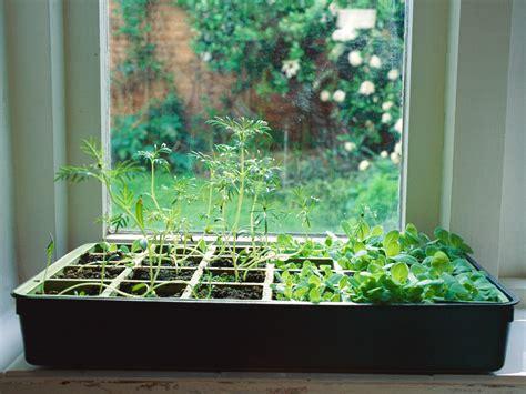 grow  indoor herb garden todaycom