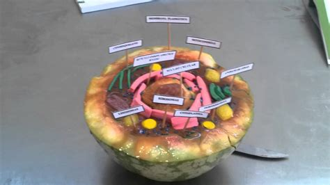 como hacer una celula con dulces celula animal youtube