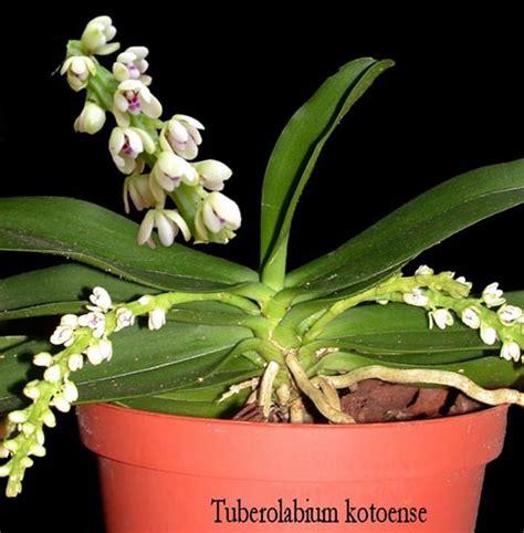 30 grad im schlafzimmer orchideen hobby