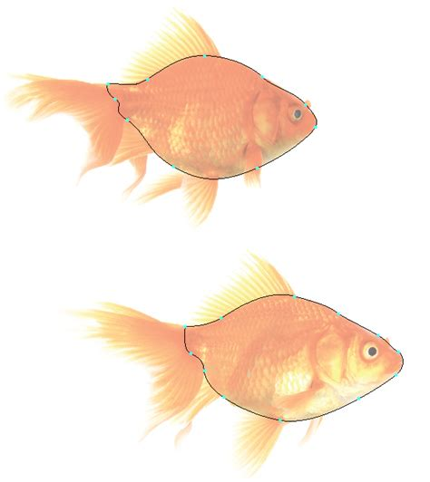 vector goldfish tutorial how to create a detailed goldfish couple with adobe
