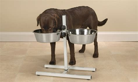 elevated feeders for large breeds 4 best kinds of bowls for large breeds overstock