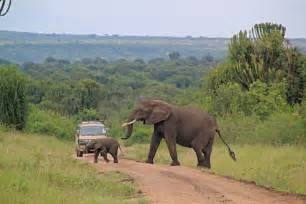 elizabeth national park pearlafric tours travel