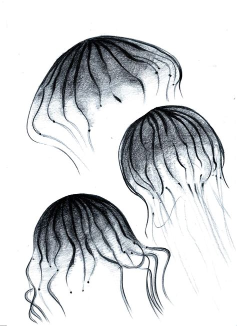 Sketches Of 8 by Jellyfish 9 Sketch Jellyfish Jellyfish Sketches