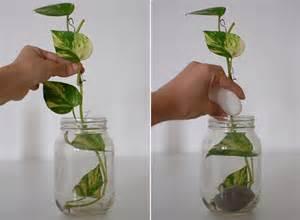 Fine Gardening Container Gardening - diy money plant in glass bottle jewelpie