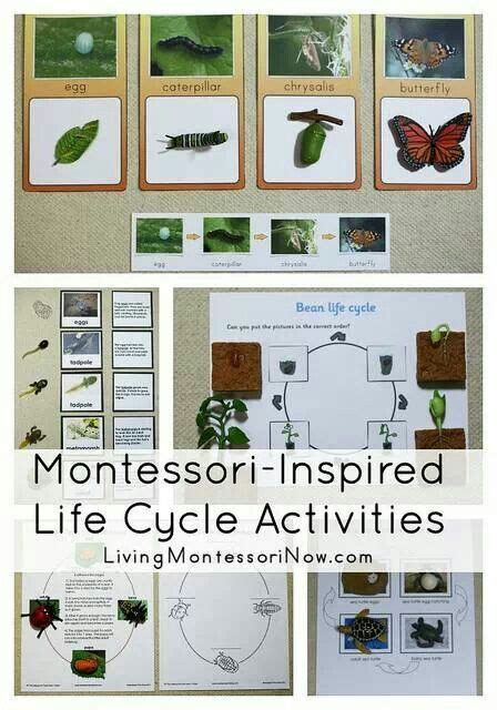 montessori printables emotions 1000 images about flash cards on pinterest montessori