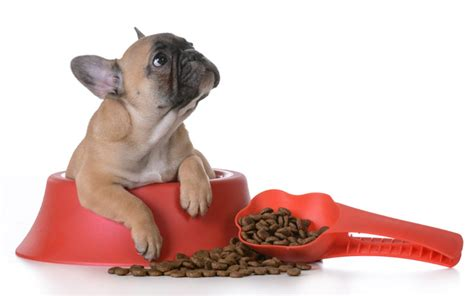 best food to feed a puppy 15 things every puppy owner must dogtime