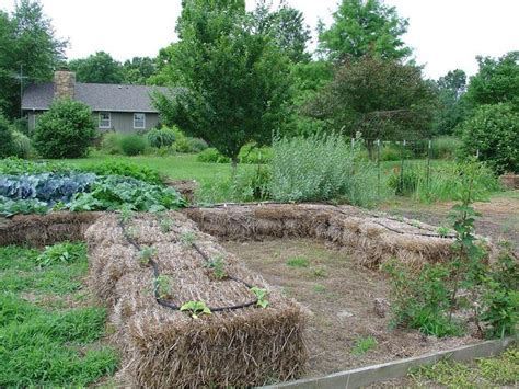 Hay Bale Garden by Straw Bale Gardening Garden Spaces