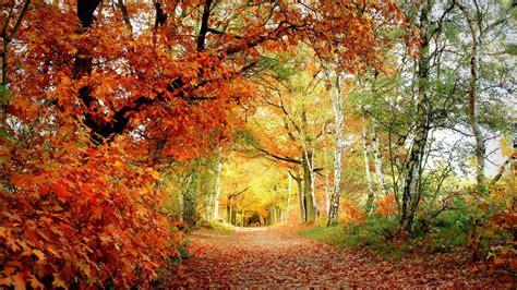 Amazing Woodland Wallpaper 37126 1920x1080 px ~ HDWallSource.com