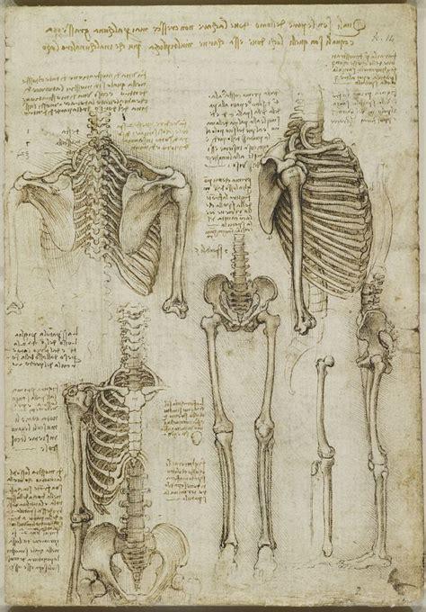 libro human traces 人体骨骼解剖图高清人体骨骼结构图 女人体骨骼图片
