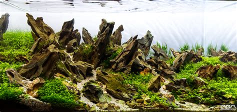 aquascaping stones from this to this aquascape progression scape 4 added