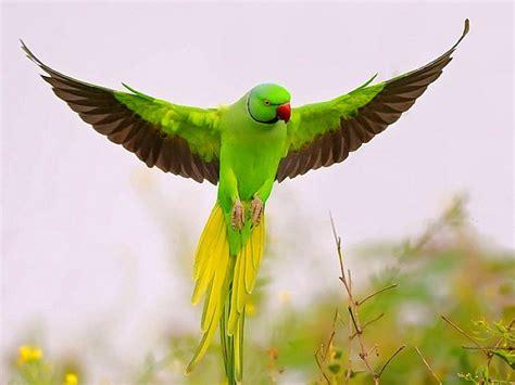 where do parrots live