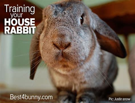 house training a rabbit 1000 ideas about house rabbit on pinterest pet rabbit rabbit ideas and rabbits