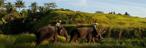 bali elephant ride tour bali elephant ride tour tours to an elephant in