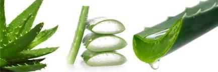 aloe vera archives vert et fruit 233
