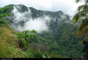 St Forest Rainforest St Lucia