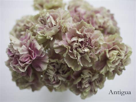 flower focus antique carnations flirty fleurs the