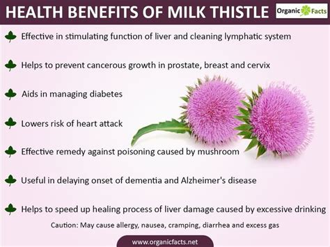 Side Effects Of Milk Thistle Detox by 25 Best Milk Thistle Benefits Ideas On