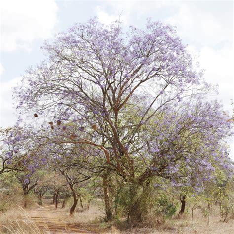 arbre d int 233 rieur liste ooreka
