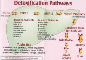 toxic what you need for optimal health whole