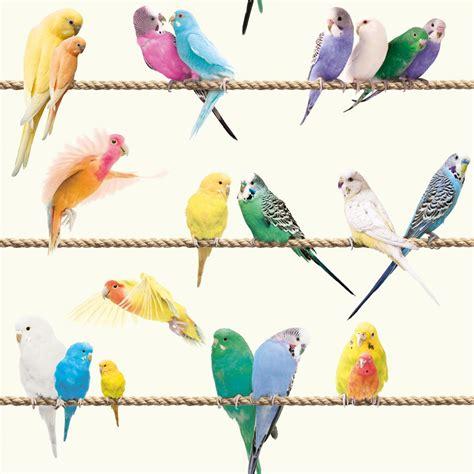 Papier Peint Exotique by Papier Peint Oiseaux Les Ins 233 Parables Sur Fil Exotique