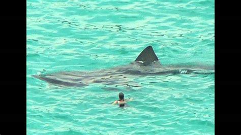 baby shark illuminati megalodon shark caught on tape don t be fooled part three
