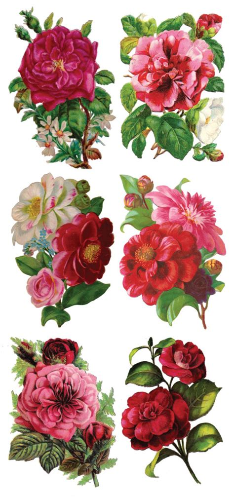 Decoupage Flowers - 1000 images about printable on vintage birds