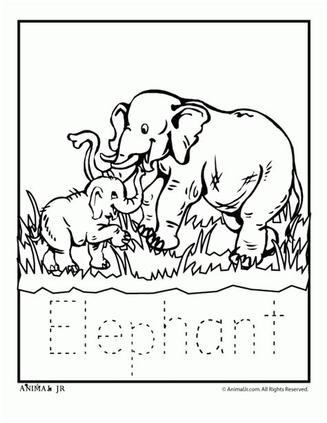 zoo coloring pages for kindergarten 88 zoo coloring pages for preschoolers zoo coloring