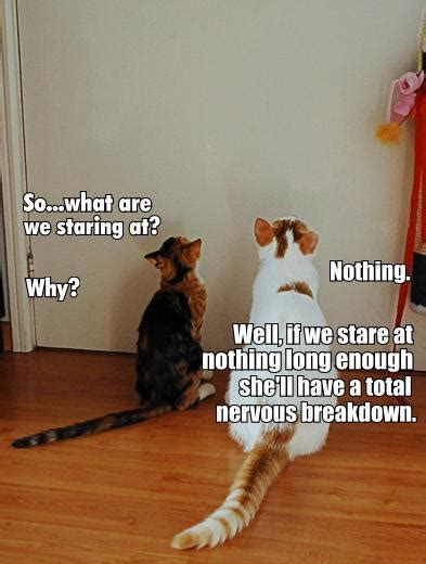 tetrabinary cat macros