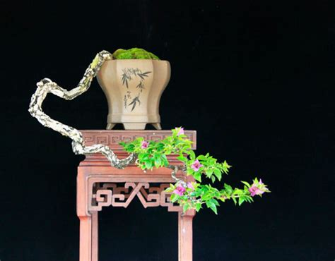 Terarium Oktagon Pot Bunga cascading literati bonsai in octagonal pot bonsai bonsai bougainvillea and ikebana