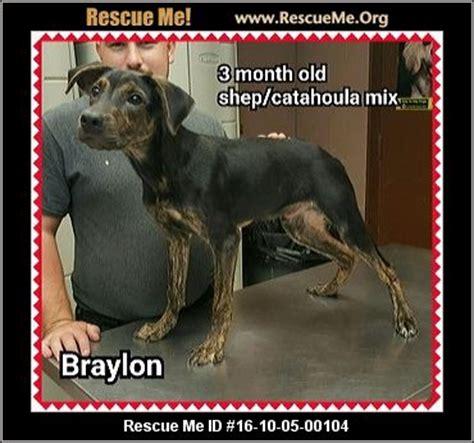 rottweiler rescue ohio ohio rottweiler rescue adoptions rescueme org