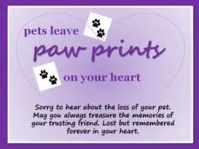 sympathy ecard for the of a pet see all my ecards at www 123greetings profile