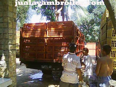 Jual Bibit Ayam Broiler Di Bekasi jual ayam broiler di kaliabang bekasijual ayam broiler