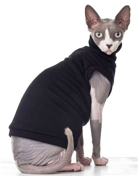 File:Sphynx cat wearing clothes