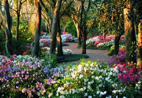 Best Flowers In The World Best Flower Garden Best Flower Garden In The World