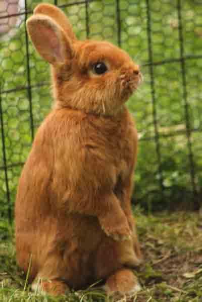 thrianta rabbit breed information modern farming methods