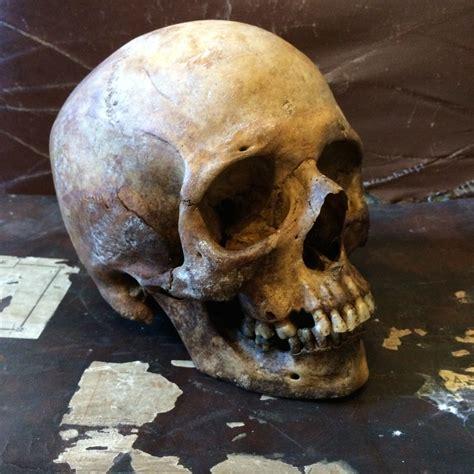 curiosities from the 5th corner the skull appreciaton