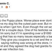 puppy place west springfield the puppy place 33 photos 15 reviews pet stores 935 riverdale st west