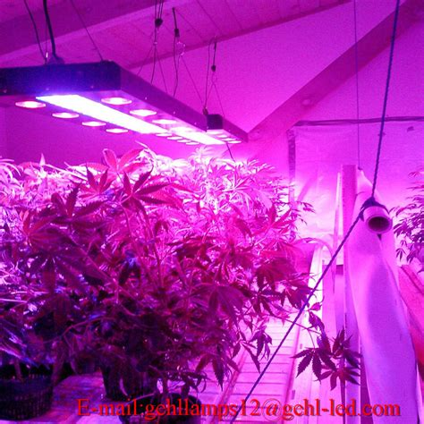 Growing Lights by Cob Led Grow Light Review How To The Best Led Grow