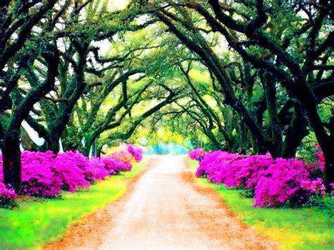 imagenes de paisajes para facebook fotos de paisajes de primavera buscar con google