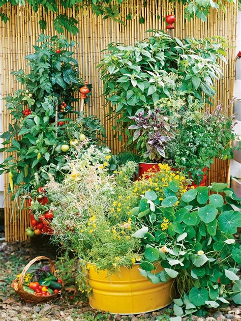 and summer unique ideas for decorating garden