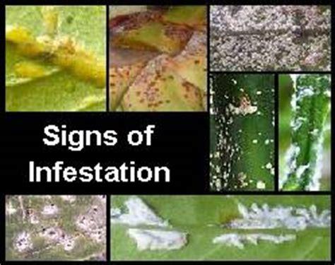 common symptoms of plant diseases earthdragon s endangered species earthdragon s