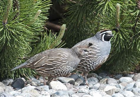 discover port townsend wa birding season photos by dave