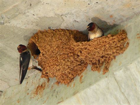 how to stop birds from building a nest on your porch rachael edwards
