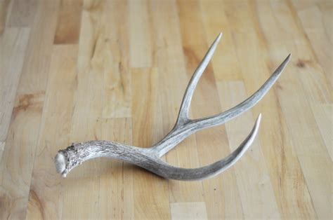 antler sale at little red creek