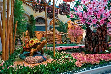 Bellagio Botanical Garden Bellagio Celebrates Japanese Culture With Vibrant Conservatory Display