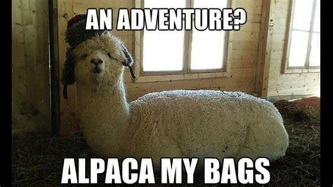 Alpaca My Bags Meme - an adventure alpaca my bags bad puns bad puns