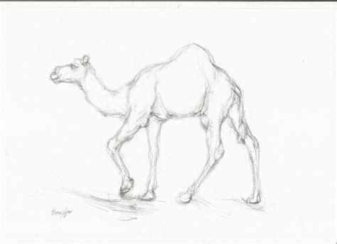 camel drawing nightwithdeer