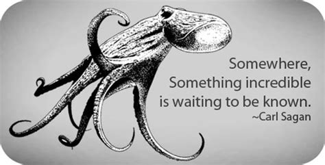 octopus animal symbolism octopus meanings